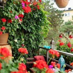 même tout petit, un balcon fleuri, c'est un peu de poésie à la maison !