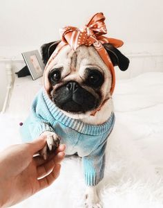 Amazing hand crafted jewellery and accessories available for pug moms and pug dads at PawsPassion. Amazing hand crafted jewellery and accessories available for pug moms and pug dads at PawsPassion. Cute Pug Puppies, Cute Dogs, Dogs And Puppies, Doggies, Bulldog Puppies, Terrier Puppies, Boston Terrier, Cute Baby Pugs, Cute Baby Animals