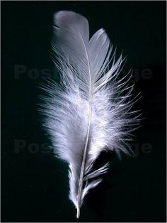 Silbende Feder Poster von Wonderful Dream Picture
