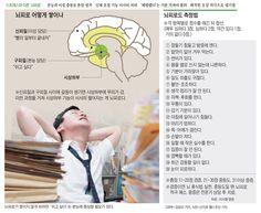 피로 느끼는 진짜 이유 '뇌'에 있다 - 조선닷컴 인포그래픽스