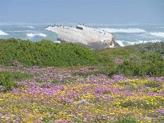 Located in Cape Agulhas, the Agulhas Country Lodge is built from natural lime stone and blends into the background of a rocky hill. Rocky Hill, Country, Lodges, Natural Stones, Cape, Ocean, Flower, Travel, Mantle