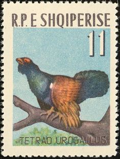 Western Capercaillie stamps - mainly images - gallery format