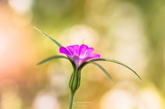 Photo Flowerful in category Macro by William Mevissen. Landscape and Nature Photography at www.williammevissen.nl.