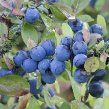 Sloe recipes that do not involve gin.