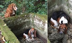 Dog stands guard for a WEEK with trapped friend until they were found together | Daily Mail Online