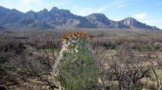 arizona mountains - Google Search