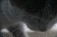 an other close up from my cat