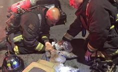 Watch firefighters revive a dog taken from a carrier in a smoke-filled home. The dog has made a full recovery.