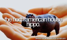 The North American House Hippo. Canadian Things, I Am Canadian, House Hippo, Skinny Pig, Hippopotamus For Christmas, Awesome Things, Cool Stuff, Funny Stuff, Cartoon Tv Shows