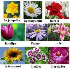 Flowers in French