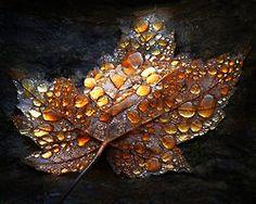 Leaf....