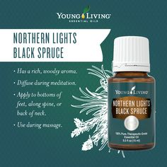 Northern Lights Black Spruce Essential Oil Facts