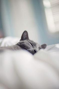 Sleepy Grey Kitty