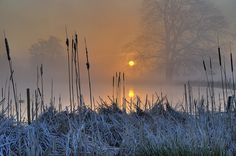 Bullrushes | Bullrushes with sunrise through the early morni… | Flickr