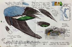 Bird Drawing Classes with John Muir Laws | Richardson Bay Audubon Center Nature Journal, John Muir, Bird Drawings, Make A Donation, Science Art, Drawing Classes, Pictures, Data Collection, Journaling