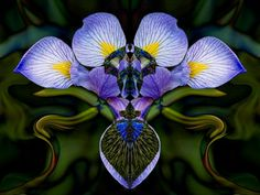 Jeweled Iris