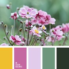 """""""пыльный"""" зеленый, """"пыльный"""" розовый, бордовый, вишневый, лиловый цвет, насыщенный желтый, нежный розовый, оливковый, осенние оттенки, оттенки розового, подбор цвета для дизайнера, светло-розовый, тёмно-зелёный, теплый желтый, цвет маджента,"""
