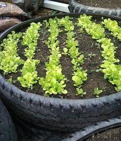 Turn a tire into an herb garden! gilbertDIY.wordpress.com pinterest.com/gilbertDIY