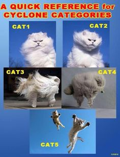 Caturday: For All You Weather Geeks Out There-