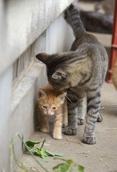 Tabby Cats Facts Mother Cat And Kittens On Slide Cats And Kittens Adoption Cute Cats And Kittens, I Love Cats, Crazy Cats, Kittens Cutest, Dwarf Kittens, Animals And Pets, Baby Animals, Funny Animals, Cute Animals