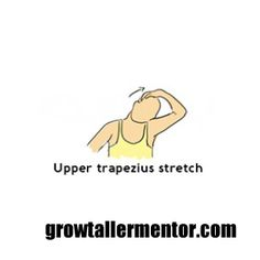 Grow 2 inches height growth supplements,how to develop height how to grow taller at can i do to get taller what foods make you grow taller. Get Taller, How To Grow Taller, Trapezius Stretch, How To Get Tall, Grow Taller Exercises, Fit, Shape