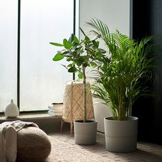 IKEA - DYPSIS LUTESCENS, Potted plant, Areca palm, Decorate your home with plants combined with a plant pot to suit your style. Ficus, Indoor Outdoor, Outdoor Plants, Indoor Office Plants, House Plants Decor, Plant Decor, Ikea, Large Plants, Open Shelving