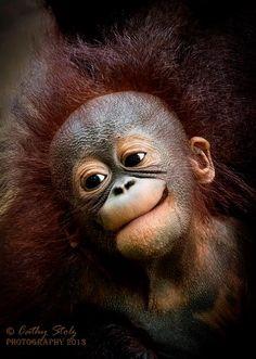 What a cute face on this baby orangutan.