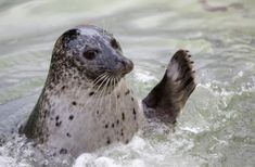 Things to do in Cornwall | Seal Sanctuary | Gweek