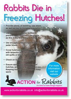 Rabbits die in freezing hutches! Important information particularly with the cold weather at the moment. January Rabbits die in freezing hutches! Important information particularly with the col. Kim Grady Brinae Rabbits die in Bunny Cages, Rabbit Cages, Rabbit Farm, Bunny Rabbit, Bunny Care Tips, Bunny Supplies, Pet Supplies, All About Rabbits, Mini Lop Bunnies
