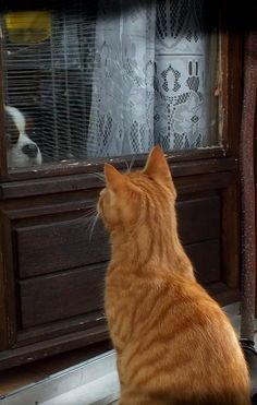 """* * """" No way ! You wanna come in an rob us. Kitteh telepathy is finely honed."""""""
