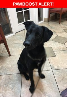 Is this your lost pet? Found in Tucson, AZ 85705. Please spread the word so we can find the owner!  Description: Very friendly, seems clean and healthy   Nearest Address: 3239 N 1st Ave, Tucson, AZ, United States