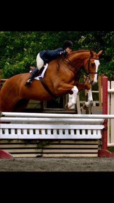 See what Rob has to say about this horse's knees!