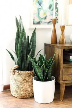 plant stand design ideas for indoor houseplants - page 38 of 67 - lo . plant stand design ideas for indoor houseplants - page 38 of 67 - lovein home. Retro Home Decor, Plant Stand, Home Decor Accessories, Mid Century Modern House, Apartment Decor, Modern Interior Design, Plant Decor, Modern Interior, Indoor Plants