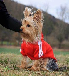 Bluza dla psa Adidog