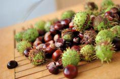 hami mnami: hon na gaštany / hunt for chestnuts