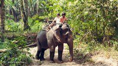 Huay Toh Vienna, Elephant, Photography, Animals, Elephants, Travel, Animales, Animaux, Photograph