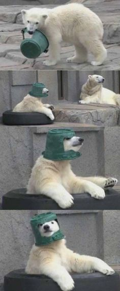 20 Cute and Funny Animal Photos for Your Monday - Tiere - Lustig Funny Animal Photos, Funny Animal Memes, Cute Funny Animals, Cute Baby Animals, Funny Cute, Best Funny Pictures, Animals And Pets, Cute Pictures, Funny Memes