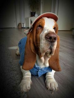 I don't usually like dogs in clothes, but this dog is just too cute.