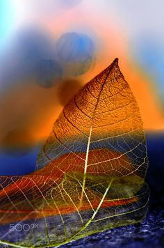 ~~Autumn leaves | macro by Veronica  Andre~~