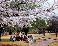 벚꽃축제 사람들