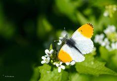 Oranjetipje-5-5-2013--DSC_7557.jpg 1.024×712 pixels