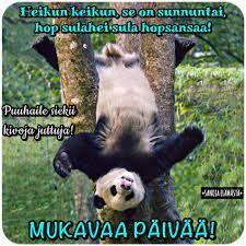 iloa sunnuntaihin - Google Search Sunday Quotes, Panda Bear, Google Search, Panda, Pandas