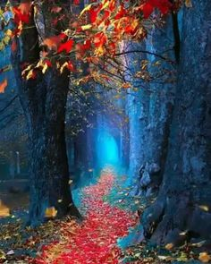 beautiful landscape with path illustration Nature Wallpaper, Wallpaper S, Nature Artwork, Rumi Love, Autumn Scenery, Rumi Quotes, Fantasy Places, Photos Voyages, Harvest Moon
