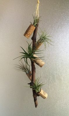 Hanging Arrangement with 5 Magnetic Airplant Cork Buds, Spritzer and Care Guide
