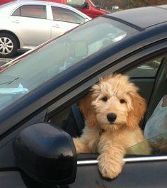 I love car rides!