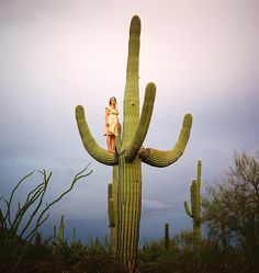 Untitled (Woman on Saguaro)...what?! This has to be photoshopped, it would be way too prickly to be up there...