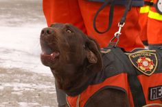 Training for a Search and Rescue Dog – Part V