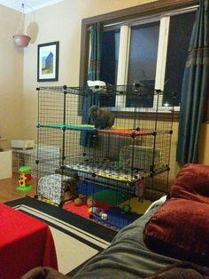 Wire Rabbit Cages, Indoor Rabbit Cage, Outdoor Rabbit Hutch, Diy Bunny Cage, Bunny Cages, Rabbit Toys, Pet Rabbit, Rabbit Enclosure, Bunny Room