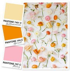 ❤ =^..^= ❤   ❤ =^..^= ❤   This soft color palette of yellow, orange and pink is so perfect for spring.