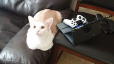 Peanut is my Buddy Loaf for MGSV weekend - credit to: swipurr.com
